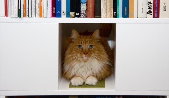 Estanter a perfecta para hogares con gatos - Estanterias para gatos ...