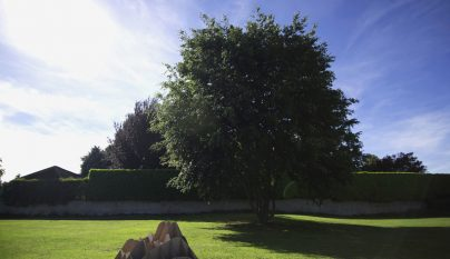 terra grass armchair8